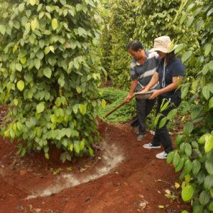 Chế phẩm đối kháng ngừa sâu bệnh cho cây trồng - NVD