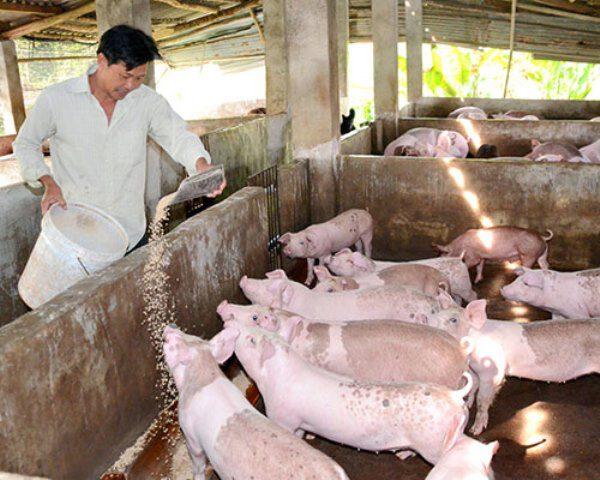 Chế phẩm xử lý chuồng trại và trộn vào thức ăn chăn nuôi gia súc, gia cầm- NVQ